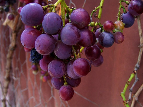 Eat Grapes At Stroke of Midnight on New Year's Eve for Good Luck Country of Origin: Spain
